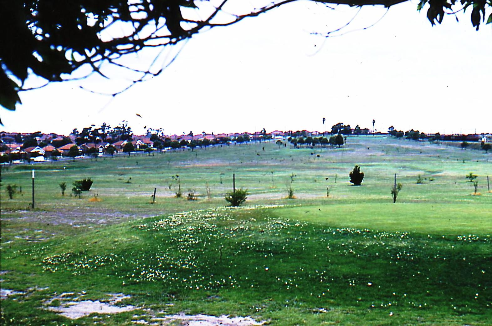 Hudson Park Strathfield Prior To Redevelopment As Golf Course Photograph 1960