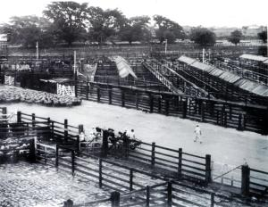 Flemington Stock & Sales Yards 1959