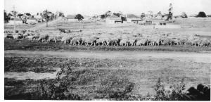 Shortland Avenue Strathfield c.1930s, Strathfield District Historical Society Collection