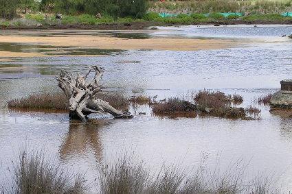 Mason Park Wetlands 1