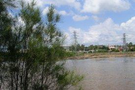 Mason Park Wetlands 3