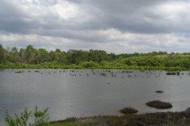 Mason Park Wetlands 4