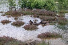 Mason Park Wetlands 5