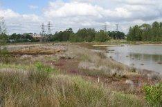 Mason Park Wetlands 7