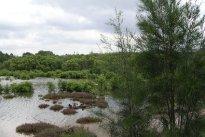 Mason Park Wetlands 8