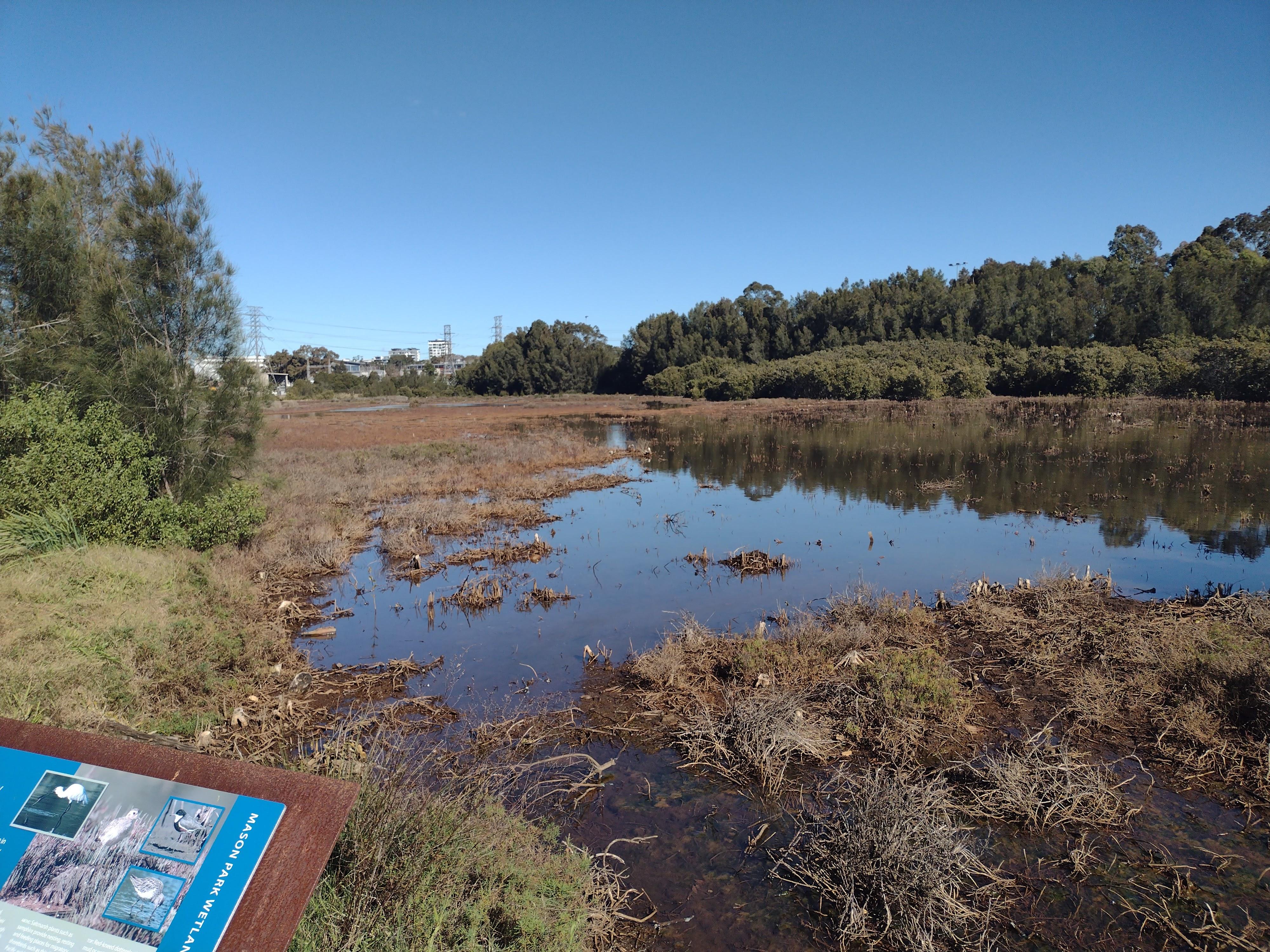 Mason Park Wetland Shorebirds Video